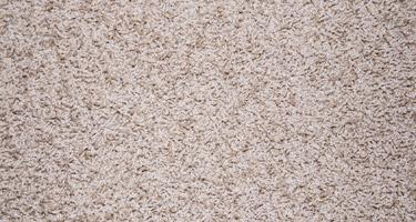 Carpet Deodorizing